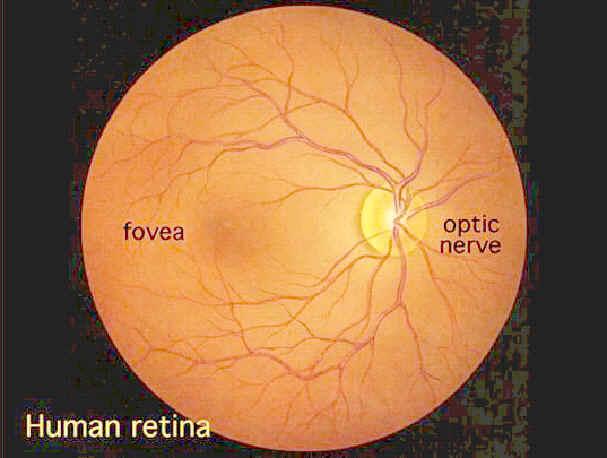 Laser Biological Hazards-Eyes | Environmental Health and